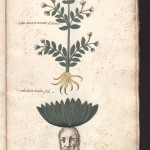Biblioteca Bologna - Ms. Aldrovandi 152, c.146r